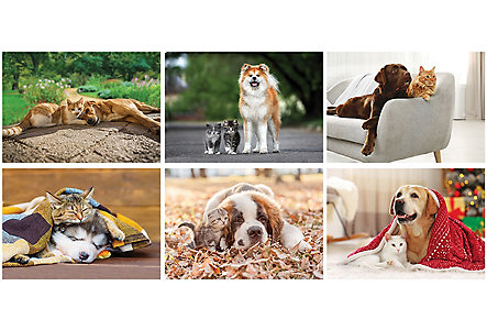 Cats And Dogs Wall Calendar